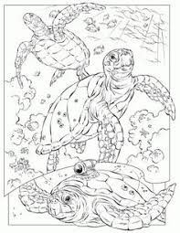 detailed sea turtle advanced coloring teacher stuff