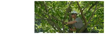 weeping willow tree service tree removal oceanside ny