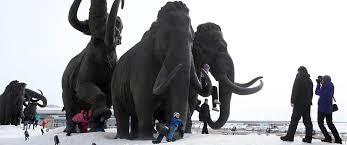 scientists bring woolly mammoths u2014 nbc