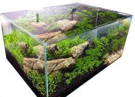 Aquascape Shop Aquascaping Aquarium Gardens Blog