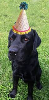 Black Lab Meme - black lab birthday blank template imgflip