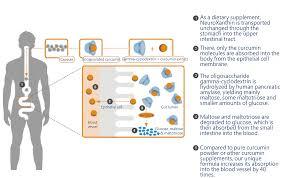 Creating A Vita Vita Neuroxanthin