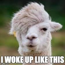 I Woke Up Like This Meme - image tagged in funny animals imgflip
