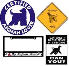 afghan hound judging list all about afghan hounds