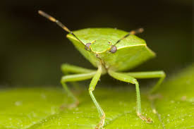 how many bug species exist howstuffworks