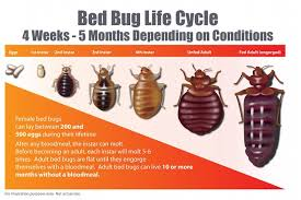 What Kills Bed Bug Eggs How Long Do Bed Bugs Live Bed Bug Guide
