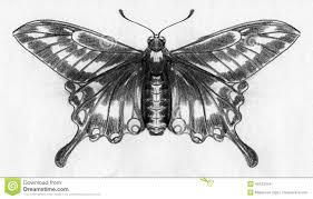 butterfly sketch stock illustration image 46423349