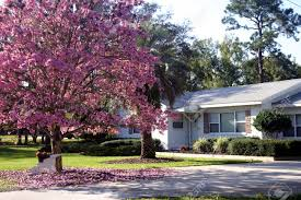 front of a white ranch style house with a pink tabebuia tree