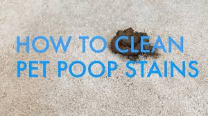 How To Remove Rug Stains How To Clean Pet Stains From Carpet Life Is Clean Youtube