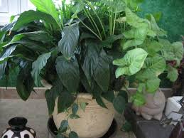 Indoor Container Gardening - a guide to northeastern gardening container gardening indoors