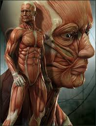 Human Body Anatomy Pics Drawing How To Study Anatomy As An Artist Graphic Design