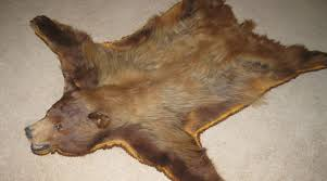 rugs bear fur rug acceptable polar bear skin rug real u201a inviting