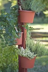 homelife 10 best plants for vertical gardens vertical garden post the green head