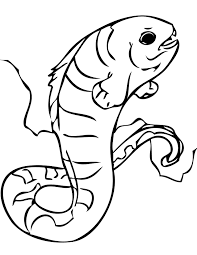 moray eel moray eel moray eel coloring pages funny picture of