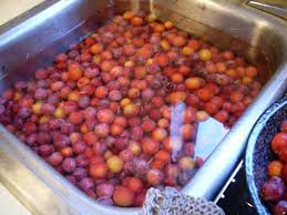 how to can whole plums an illustrated guide delishably