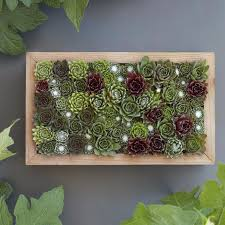vertical gardening with succulent living pictures