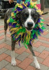 mardi gras dog family friendly mardi gras in the other side of louisiana