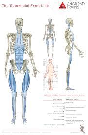 Human Anatomy Pdf Books Free Download Anatomy Trains 3rd Edition Book U0026 Posters Thomas W Myers
