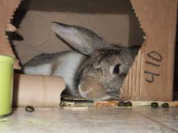 Air Conditioned Rabbit Hutch The Bunny Guru Page 4 Of 11 Living With House Rabbits