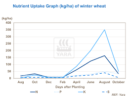 the right timing of nutrient application in wheat yara
