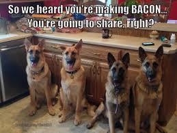Dog Bacon Meme - bacon memes baconcoma com page 52