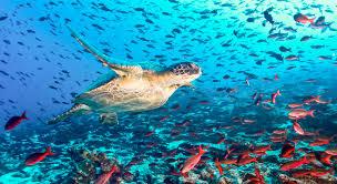 Galapagos Map Ultimate Galapagos Itinerary U0026 Map Wilderness Travel