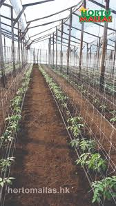 greenhouse tomato trellis with hortomallas your plant support
