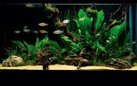 Best Substrate For Aquascaping How To Set Up A Simple U2014 But Stunning U2014 Planted Tank U2014 Practical