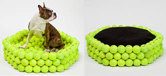 modern and contemporary pet products updated daily