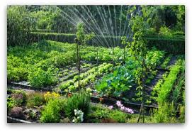 Vegetables Garden Ideas Vegetable Garden Irrigation How Much And How Often