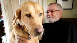 Blind Dog And His Guide Dog Blind Man And His Guide Dog Thrilled With Their Treatment By Air