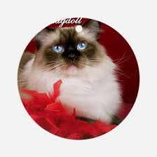 gifts for ragdoll cat unique ragdoll cat gift ideas cafepress