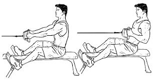 Muscles Used During Bench Press Scapular Retraction Exercises Benefits U0026 Proper Form
