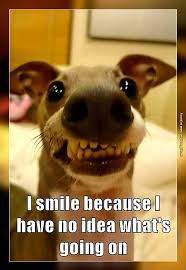 Whats Going On Meme - if you don t know what s going on smile very funny pics