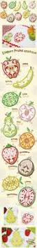 Kitchen Embroidery Designs 19 Best Embroidery Fruits U0026 Vegetables Bordado Frutas E