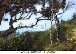 hanging rope stock images royalty free images vectors