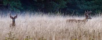 Deer hunting regulations mass gov