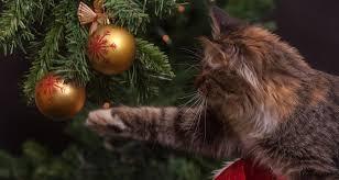 Christmas Cat Memes - christmas cat memes 2017 wishing everyone a meowsy catmas and a