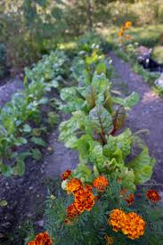 Vegetable Gardens In Florida by If You Re Looking For Some Easy To Grow Vegetables Here Are A Few