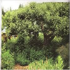 28 best edible forest gardens images on pinterest forest garden