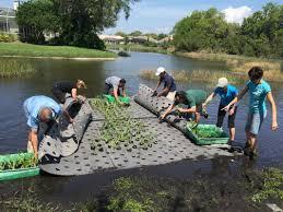 native pond plants for sale sarasota county neighborhood grant program
