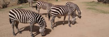 Arizona wildlife tours images Save on a safari printable coupons for wildlife tours jpg