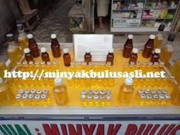 Minyak Bulus Asli Papua minyak bulus 4 103kb minyak bulus asli minyak bulus putih