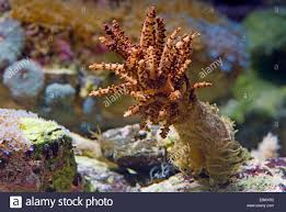 tree coral for sale rainforest islands ferry