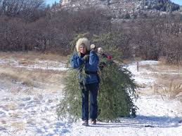 spruce mountain christmas tree cutting douglas county government