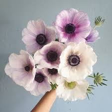 Images Of Pretty Flowers - get 20 bunch of flowers ideas on pinterest without signing up