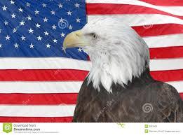 Eagle American Flag Bald Eagle And American Flag Stock Photo Image 3684330