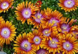 Low Maintenance Plants And Flowers - favorite sun perennials