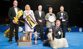 afghan hound national dog show charlie the skye terrier wins best in show at the 2015 national