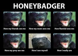 Meme Honey Badger - pass it on honey badger don t care hilarious daniel griswold